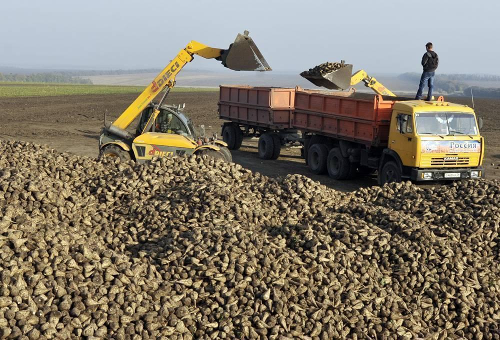 Тамбовская область бьет прошлогодние рекорды по сбору сахарной свеклы