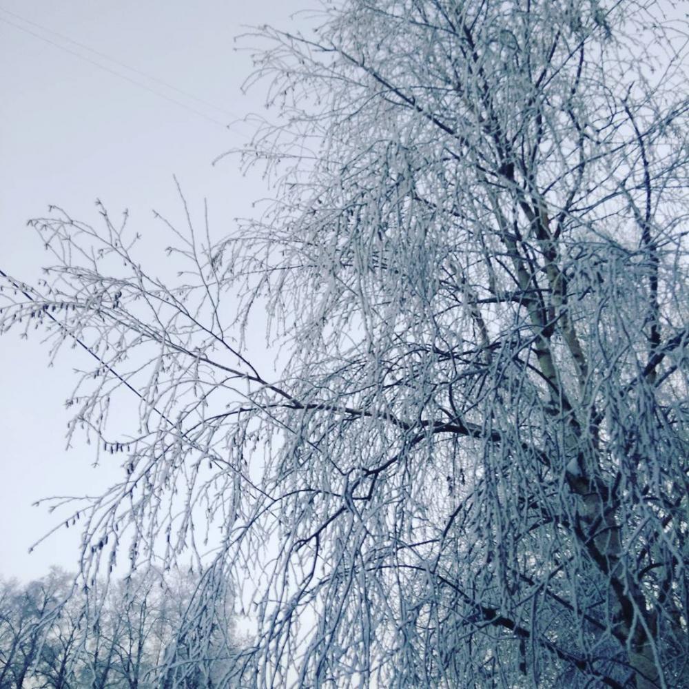 Что случится со снегом в Тамбове, если он выпадет сегодня