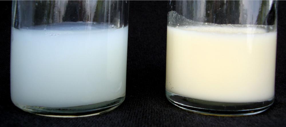 «Водянистым» молоком поили малышей в тамбовском детском саду