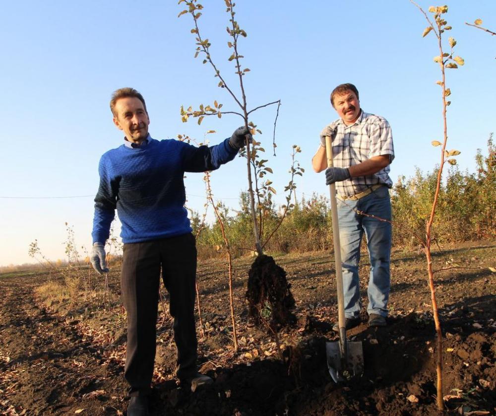 Сад тамбовских вишен и яблонь посадят в Люксембурге