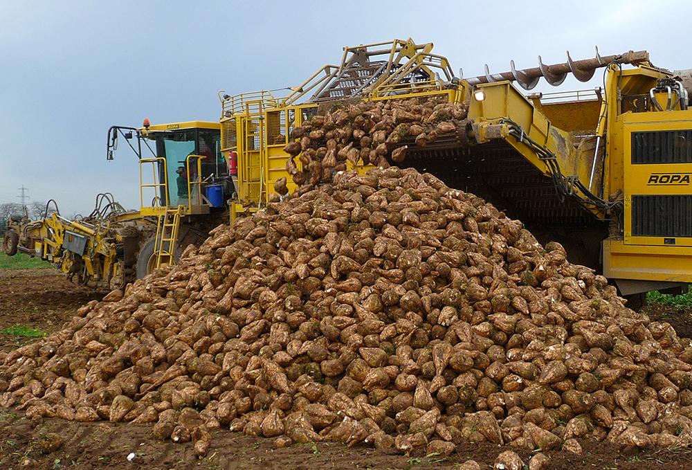 3 миллиона тонн зерна и 3,5 миллиона тонн сахарной свеклы собрали с полей Тамбовщины