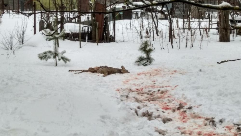 Мертвую косулю нашли в парке Дружбы Тамбова
