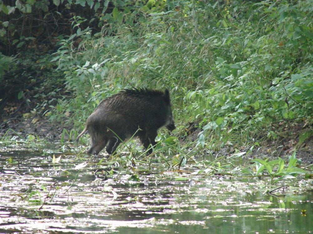 В заказниках Тамбовской области растет численность популяций охраняемых животных