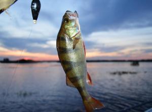 Мастера ловить рыбу соберутся на чемпионат под Котовском