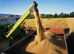 Три миллиона тонн зерна собрали тамбовские аграрии