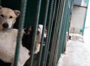 Тамбовчане присоединились к Всероссийской акции о защите животных
