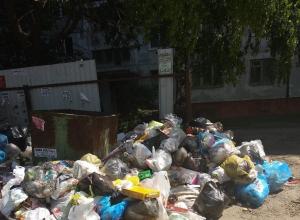 Тамбов «зарастает» мусором из-за нерасторопности управляющих компаний