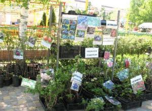 В Тамбов привезли редкие сорта винограда с женскими именами