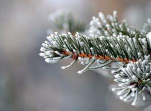 Семеро «смелых» попались на незаконной вырубке ёлок в тамбовских лесах