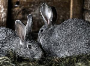 Украл, чтобы съесть. Задержан похититель кроликов из Пичаевского района