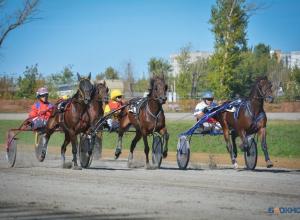На тамбовском ипподроме выступили лучшие лошади России