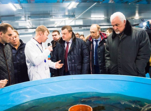 «Тамбовский осётр» обеспечит потребность населения области в рыбе на четверть