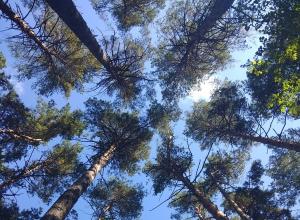 «Зеленый щит» Тамбова оказался в лидерах экологического рейтинга