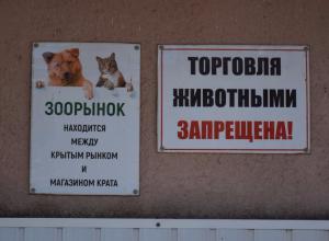 Контроль за торговлей животными в Тамбове ужесточат