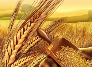 Тамбовская область в два раза увеличила экспорт зерна