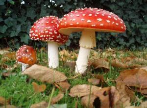 28 человек отравились грибами из-за того, что не умеют их готовить