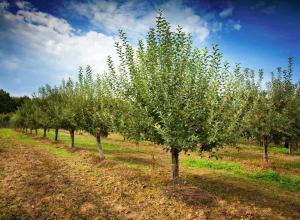 Губернатор призвал развести сады в каждом муниципалитете