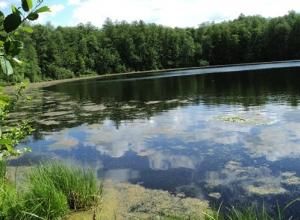 О сохранении природы не забываем: Тамбовская область приняла участие во всероссийском субботнике