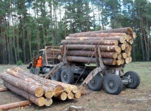 Лучший лесной питомник России находится в Рассказовском районе Тамбовской области