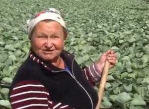 Тамбовские аграрии стали героями программы «Вести недели» на канале «Россия-1»