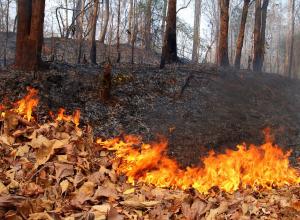 Пикник придется отложить: пребывание в лесах Тамбовщины ограничили