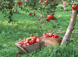 В области определили садоводство приоритетным направлением сельского хозяйства