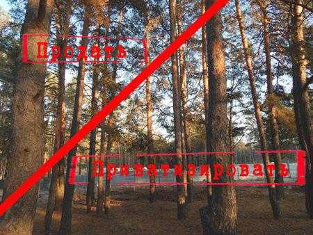 Преступный раздел пригородного леса продолжается