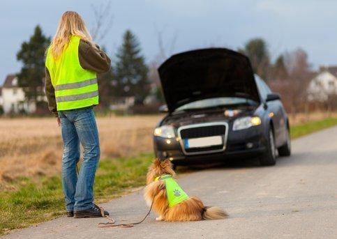С сегодняшнего дня за отсутсвие жилета водителей будут журить, но не наказывать