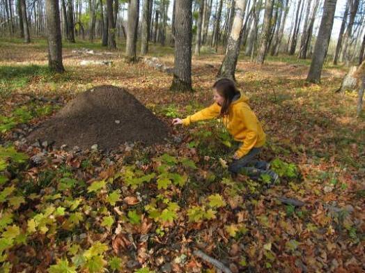В Тамбовской области будущих лесоводов готовят со школьной скамьи