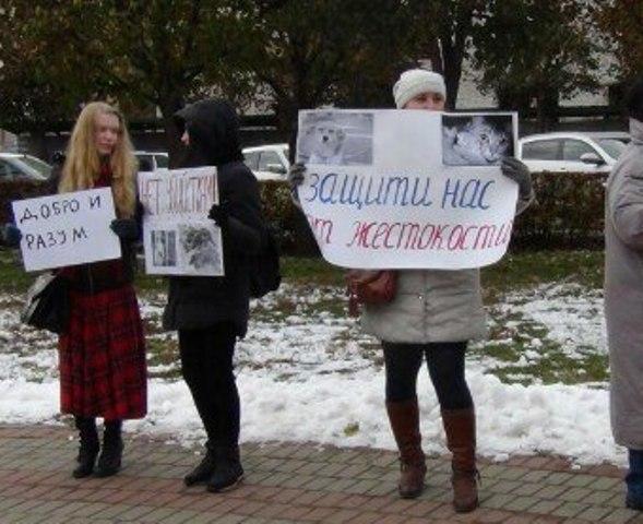 Тамбовские зоозащитники включились во всероссийскую акцию «Живодерам не место среди нас»