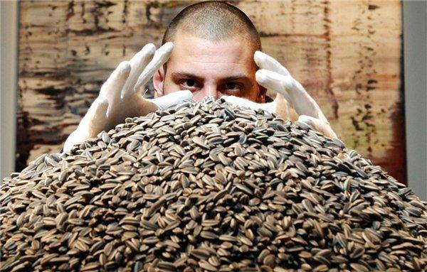 Чисто полузгать: мучкапские любители семечек украли 30 тонн