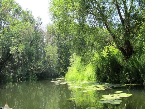 На реке Ворона начались противопаводковые работы