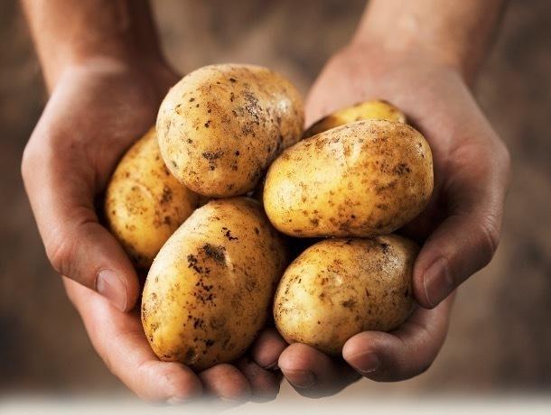 В храме в центре Москвы продают тамбовскую картошку