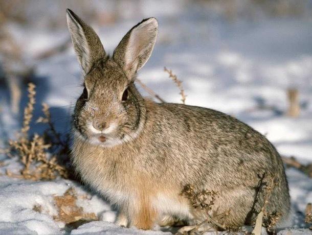 В Тамбовской области открывается осенне-зимний сезон охоты