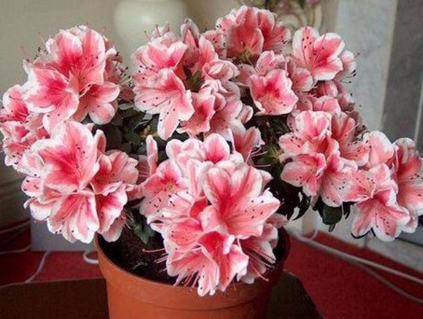 Областная библиотека вызвала тамбовчан на цветочный бой