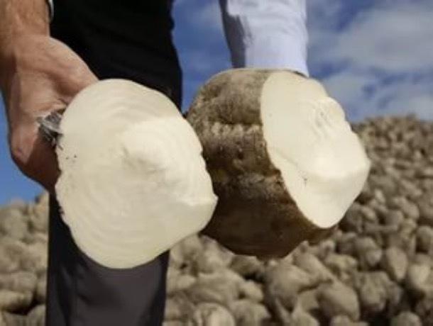 Уборочные работы завершены на 90 процентах тамбовских полей