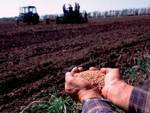 Аграрии Тамбовской области перевыполнили план по севу озимых