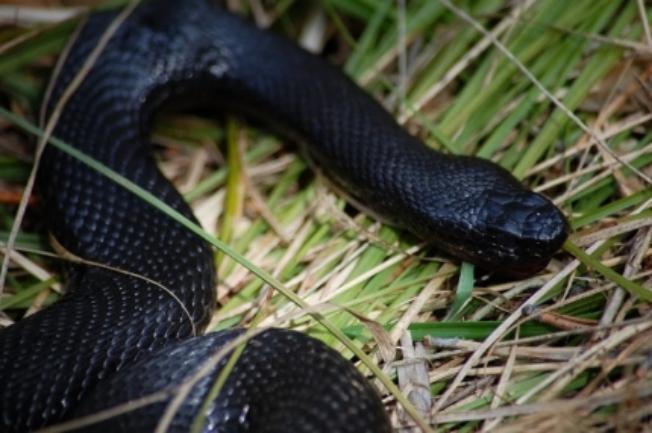 В лесах Тамбовщины участились встречи со змеями
