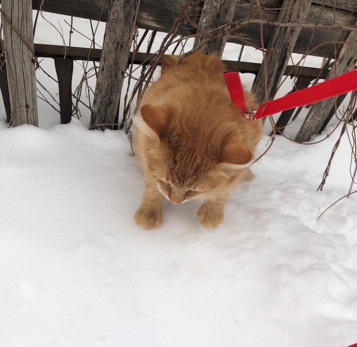 Заноябрило: снег в Тамбове ждут уже с завтрашнего дня