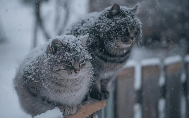 В Тамбов к середине недели придёт зима