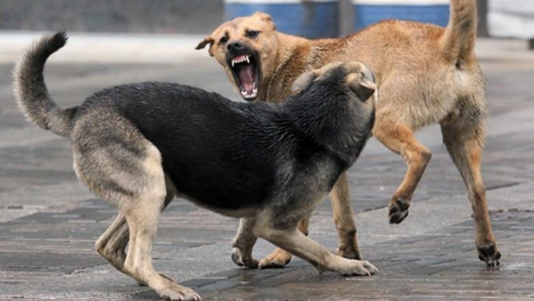 Уваровский «Горхоз» убивал бездомных животных