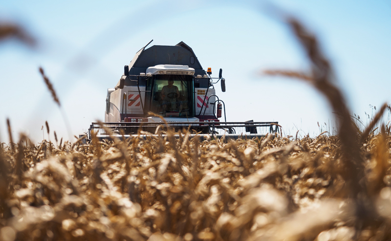 Больше 230 тысяч тонн зерна собрали тамбовские хлеборобы за выходные