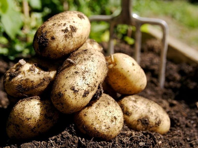 Тоннель для картошки построили в Мичуринске