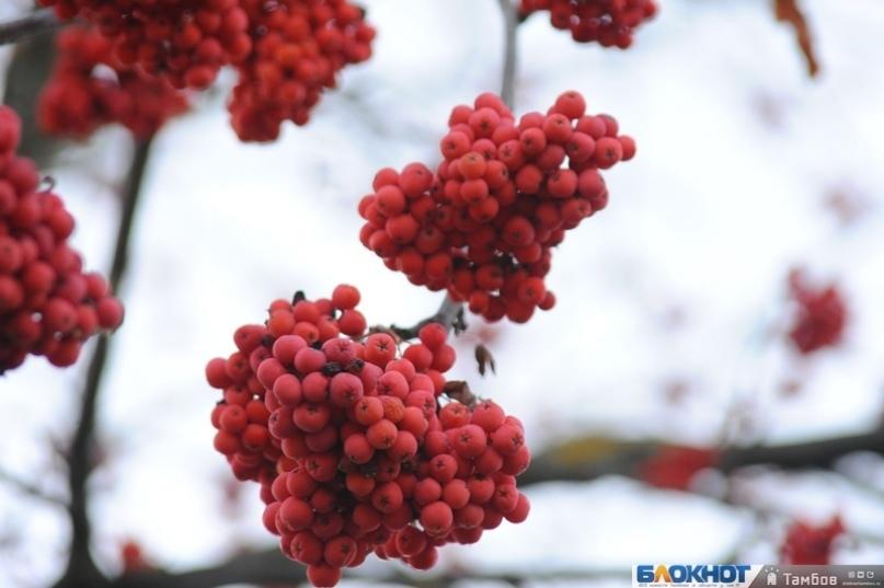 Сегодняшний день покажет тамбовчанам, какой будет зима