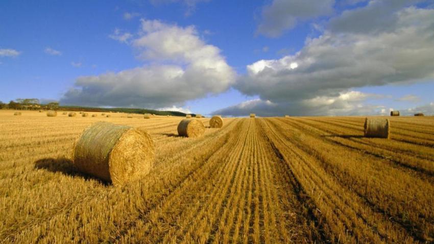 Тамбовские власти решили раздавать жителям погектару земли
