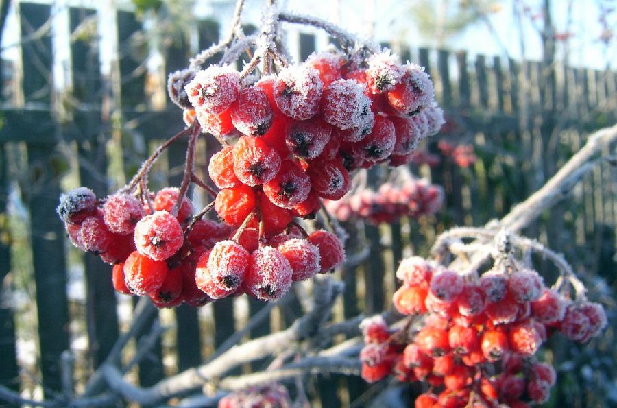 «Мороз и солнце; день чудесный!»: погода по классику ожидает тамбовчан в ближайшие дни