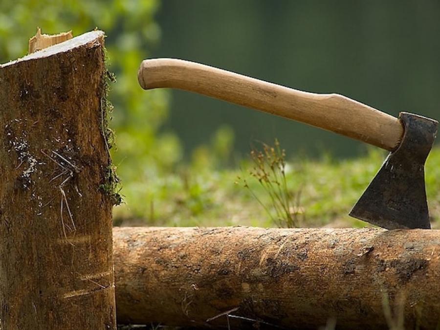 Хищение леса произошло в Тамбовской области