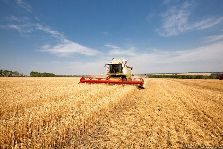 Аграрии Тамбовщины установили новые рекорды по сбору урожая