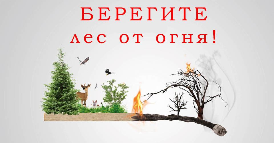 В Тамбовской области ограничено посещение лесов до 1 октября