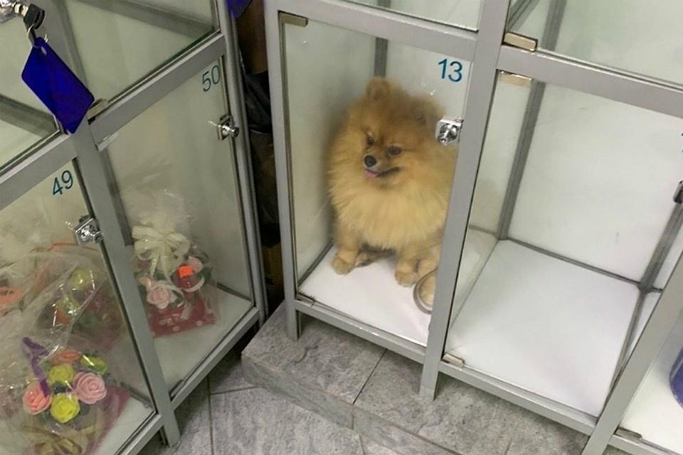 В одном из мини-маркетов на Набережной собаку закрыли в камере для хранения вещей